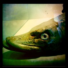 Look the fish right into his eye. Tyra Lundgen #Visby