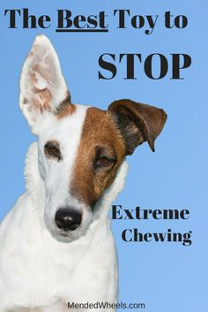 My Dogs Are Into A Sport Called Extreme Dog Chewing They