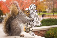 College Girl Dresses Up Squirrel That Hangs Around Penn State - Student befriends campus squirrels then dresses them in the cutest outfits ever