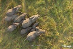 グーグルアース動物園で見るゾウ(チャド共和国)