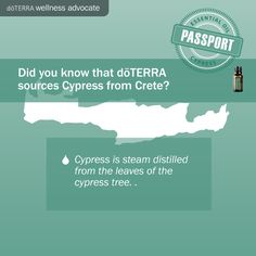 #Cipres #Cypress Aceites esenciales doTERRA doTERRA essential oils Join and Save 25% | Unete y ahorra 25% https://www.mydoterra.com/draavalosnutricionista/#/joinAndSave