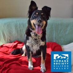 Dixie is a pretty girl who would love to go hiking, jogging, or adventuring with you!