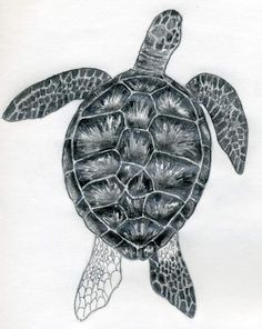 How To Draw A Turtle turtle drawing - Drawing Tips Turtle Outline, Sea Turtle Art, Sea Turtles, Shading Drawing, Painting & Drawing, Drawing Tips, Rock Painting, Pencil Shading, Animal Sketches