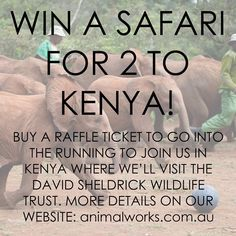 Get your raffle tickets here: http://www.animalworks.com.au/shop/#/raffle-ticket-win-a-kenyan-safari-for-two/