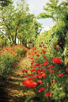 A poppy-flanked path on blissfully unpeopled Torcello l A Photo Tour of Venice's Outer Islands - Condé Nast Traveler Beautiful World, Beautiful Places, The Secret Garden, Red Poppies, Garden Paths, Pathways, Belle Photo, Beautiful Landscapes, Mother Nature