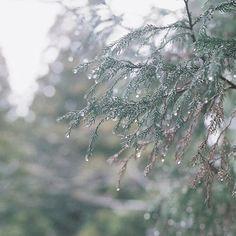 【a_utanoha】さんのInstagramをピンしています。 《↟森 先日 行った原生林で 不思議なことが起こりました ・ ある鹿が 鳴きながらずっと かわいい人についてきた🦌 ・ まるで 恋をしたように‥ ・ 昔の彼氏だったんじゃない?って笑ってたけど 帰り際も 見つめて鳴いていた  キューっ キューって ・ 鹿せんべいのおねだりとは違う雰囲気で ・ ・ #恋する鹿#森#しずく#雨上がり#tree #日々のこと#フィルムカメラ#フィルムに恋してる#film#indies_gram#hueart_life#team_jp_#tv_depthoffield#pics_jp#reco_ig#igersjp#cools_japan#vsco_sweden#nikon#オールドレンズ#写真好きな人と繋がりたい#ファインダー越しの私の世界》
