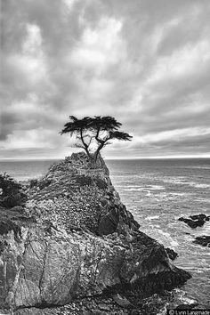 """""""Never"""" - Black and White Landscape Photography by Lynn Langmade - monochromatic photo of a seascape with a lonely tree looking out at a turbulent ocean"""