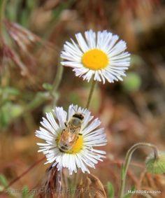Wild flower in macro