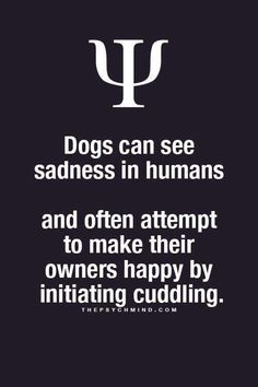 dogs can see sadness in human and often attempt to make their owners happy by initiating cuddling.