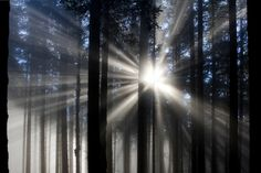 Fog meets Sun meets Tree by Alex Lichtenberger on 500px