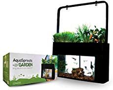 7 Awesome Betta Fish Aquaponics Kits For Your Home In 2020   TFCG