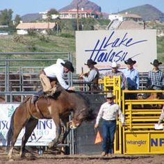 Lake Havasu City, AZ - Rodeo