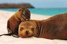 50 Parents From The Animal Kingdom And Their Adorable Kids Cute Creatures, Beautiful Creatures, Animals Beautiful, Animals Amazing, Cute Baby Animals, Funny Animals, Animal Babies, Wild Animals, Baby Seal