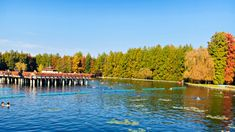 The Incredible Healing waters of Lake Heviz - A Well Travelled Beauty Lake Water, Hot Springs, Geology, Healing, The Incredibles, River, Explore, Projects, Outdoor