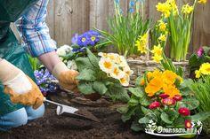 КОГДА НЕЛЬЗЯ САЖАТЬ и СЕЯТЬ  Народные приметы для садоводов-огородников!    - Картофель нельзя сажать на Вербной неделе, по средам и субботам - будет портиться.  - Если весна ранняя, то капусту, как и лук сеют на четвертой неделе Великого поста или позже - на пятой.  - Если весна запаздывает, то производят посев в последние дни Страстной недели, особенно в субботу.  - Подсолнухи лучше сажать в субботу, до восхода солнца или после его захода http://ogorodko.ru. Последнее предпочтительнее…