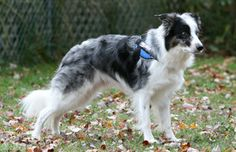 Dog harnesses designed with performance dogs in mind! Customizable! http://www.mightymitedoggear.com