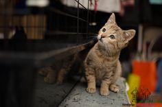Beza is looking for a home ... #cute #cutecats #cats #caturday #kot #koty #neko #gato #katz #katzen #kittens #chat