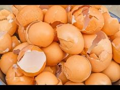 You Will Never Throw Away Eggshells After Watching This - YouTube
