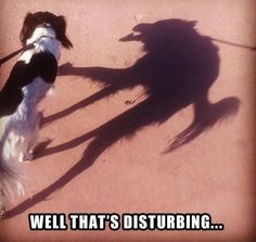 ha ha, this is awesome intentional shadow-playing!!! and it's done, by simply taking your dog for a walk.