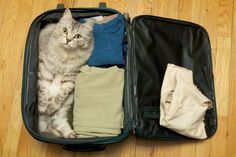 Cat to go ...