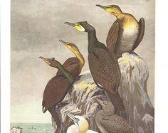 seagull vintage illustration - Buscar con Google