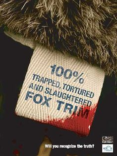 What the tag should really say. Say No To Fur! Say No To Animal Torture and Cruelty! Please, for the love of animals Stop Animal Cruelty, Animal Testing, Animal Rescue, Peta, Cane Corso, Sphynx, Chinchilla, Wild Life, Pitbull