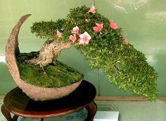 Beautiful azalea bonsai... and I LOVE the bowl/container!