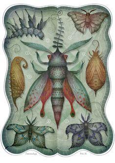Entomology Tab. II  A4 art print by vladimirsart on Etsy, $20.00