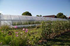 Cosmos pentru atragerea polenizatorilor Cosmos, Sun, Plant, Lawn And Garden, Space, Outer Space