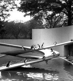 The Modernist style Penguin Pool at London Zoo, Regent's Park, London UK [Berthold Lubetkin / Tecton, 1934] was constructed with dual spiral concrete ramps, and quickly became a favourite for the zoo's visitors. However, when restoration work was needed in 2004, the penguins were moved out temporarily to a nearby duck pond, which they much preferred, so they refused to move back to their famous architectural masterpiece! Listed Grade I