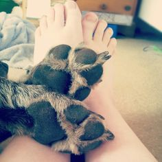 We are the best of friends #gsp #germanpointer #bestfriends #paw #pawprints #feet #footprints