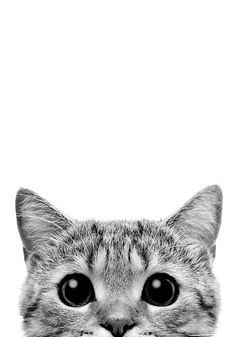 Kitty peeks PRINTABLE Poster black and white minimalist modern Print, Home Decor scandinavian Print, Digital D Cat Pattern Wallpaper, Cute Cat Wallpaper, Animal Wallpaper, Pastel Wallpaper, Dark Wallpaper, Baby Cats, Cats And Kittens, Printable Poster, Free Printable