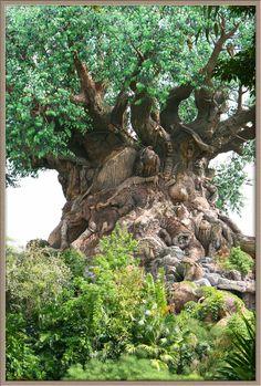 https://flic.kr/p/wEpBG | Mystery Tree | Look at the tree trunk!