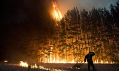 Northern fires caused almost a quarter of global forest loss, study shows