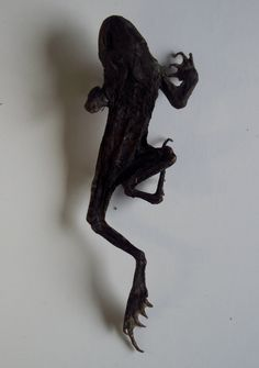 Witchcraft: (Protection/curse) Mummified toad, Toad men. Privately owned UK Westcountry Collection. BB