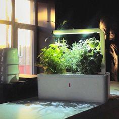 Fancy - Click & Grow Smartpot