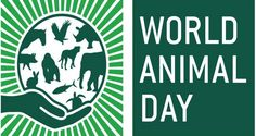 Not quite sure why but World Animal Day crept up on me; maybe it was the careful stealth of its approach – like a cat stalking its prey. Today, October, is World Animal Day,. Robin Day, Pet Day, Like A Cat, Wildlife Conservation, Days Of The Year, Animals Of The World, Animal Welfare, My Animal, Animal Facts