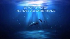 Save Mother Earth, Save Our Earth, Spotted Eagle Ray, Global Warming, Marine Life, Gaia, Wildlife, Ocean, Feelings
