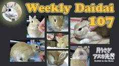 Weekly Daidai 107