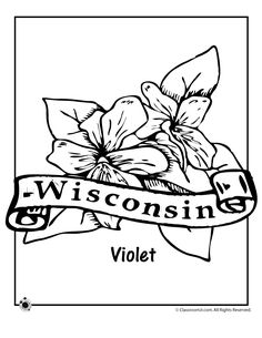 state flower coloring pages wisconsin state flower coloring page classroom jr