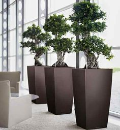 interior-plantscapes-home-interior-plants