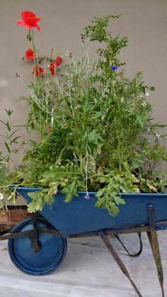 9 Unusual Kids Gardening Ideas – Fun Lockdown Garden Activities for all the Family Garden Projects, Garden Tools, Garden Trampoline, Veg Patch, Wildflower Seeds, Companion Planting, Wheelbarrow, Back Gardens, Hedges