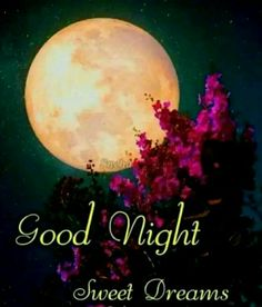 Good Night Funny, Good Night Love Images, Good Night Sleep Tight, Good Night Image, Good Night Messages, Good Night Wishes, Good Night Sweet Dreams, Good Night Quotes, Good Morning Picture