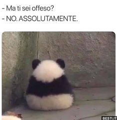 Ma ti sei offesso Wtf Funny, Funny Cute, Foto Top, Italian Memes, Puns Jokes, Funny Scenes, Funny Video Memes, Me Too Meme, Wallpaper Iphone Cute