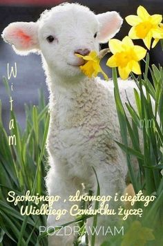 Cute Baby Animals, Animals And Pets, Funny Animals, Nature Animals, Animals Tattoo, Harvest Mouse, Spring Lambs, Spring Animals, Animal Magic