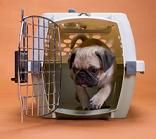 more on Dog Crate Training