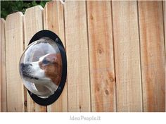Dogs are inherently curious and will be restless without visual stimulation. With a Fence Window for Pets installed in your backyard, your pet will b. Cockerspaniel, Dog Fence, Front Fence, Horse Fence, Small Fence, Farm Fence, Cool Stuff, Awesome Things, Four Legged