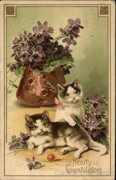 Hearty Congratulations Cats ... vintage post card.