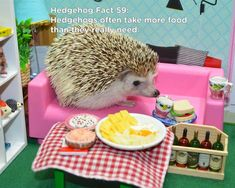 Twenty Incredible Hedgehog Facts That Will Astound You Cute Animal Memes, Cute Funny Animals, Cute Dogs, Hedgehog Facts, Cute Hedgehog, Guinea Pig Toys, Guinea Pigs, Cute Baby Bunnies, Cute Babies