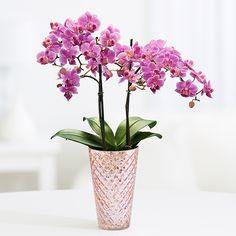 proflowers who sent me flowers